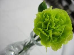green-carnation
